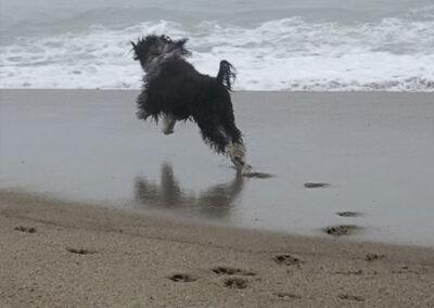 Jordie Running
