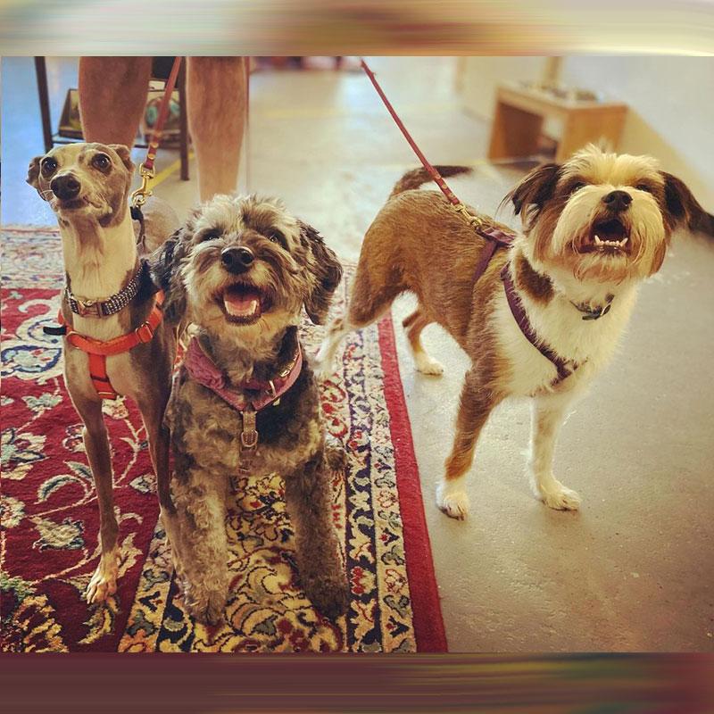 Rocco, Edie, Maple